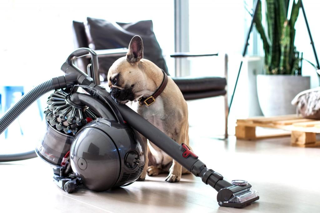 quel est le meilleur aspirateur pour les poils de chien. Black Bedroom Furniture Sets. Home Design Ideas